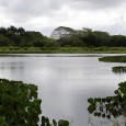 YAMASA.- El Ministerio de Medio Ambiente y Recursos Naturales desarrollará desde este viernes y hasta el domingo un amplio cronograma de actividades con motivo de celebrarse el Día Mundial del […]
