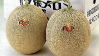 Dos melones de Yubari, Japón, han alcanzado el precio record […]