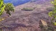 BARAHONA. Rafael Féliz.- Ambientalistas de esta región solicitaron al presidente […]