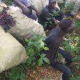 Aunque no es una noticia nueva, inmigrantes haitianos siguen quemando […]
